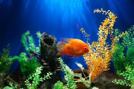 voedingsbodem aquarium kopen