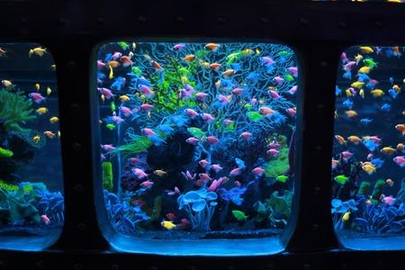 achterwand aquarium