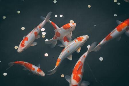 aquarium achterwand poster
