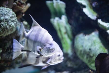 aquarium algenmagneet