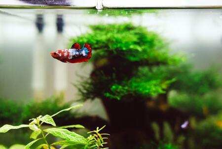aquarium kunstplant