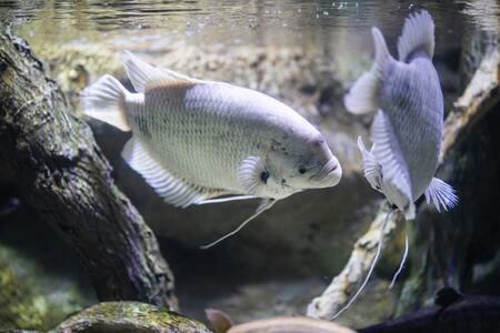 aquarium pomp