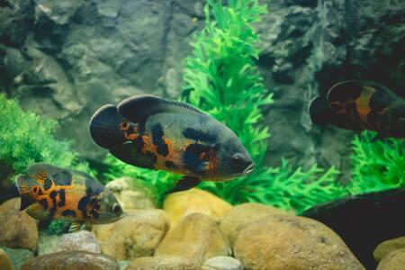 aquarium steentjes