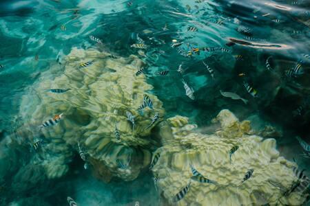 aquarium verwarming