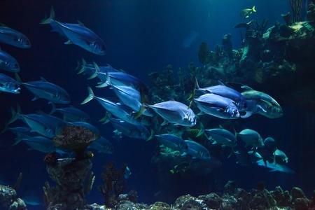 aquarium wand