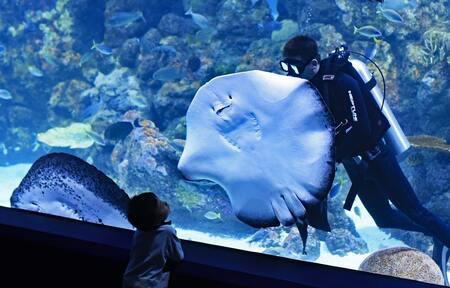 aquarium watertest