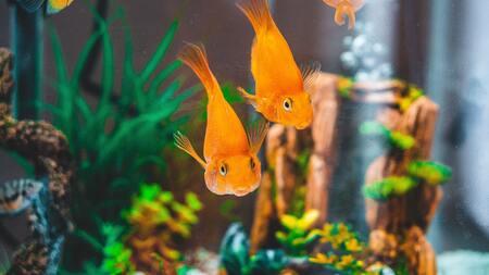 aquariumpomp