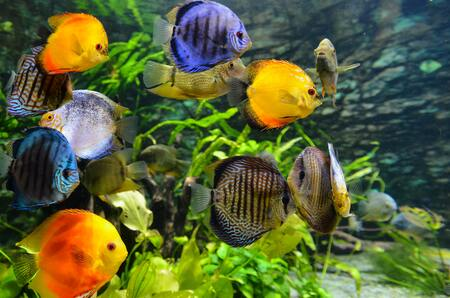 aquariumverwarming