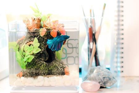 kweekbak aquarium