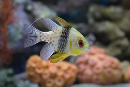 luchtsteen kopen aquarium
