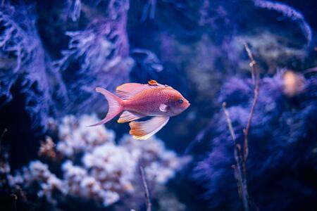 ph meter aquarium kopen