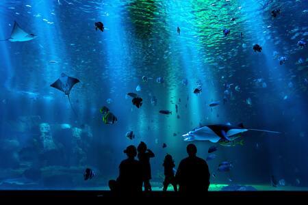 ph meter voor aquarium