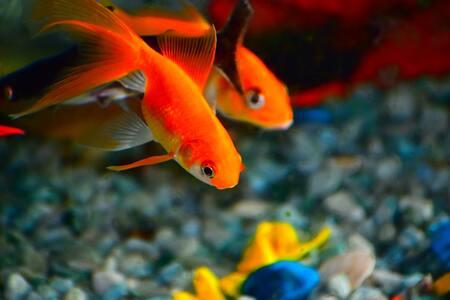 stofzuiger aquarium