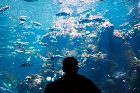 verwarming aquarium