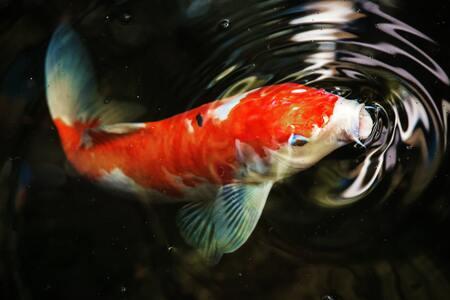 voederautomaat vissen