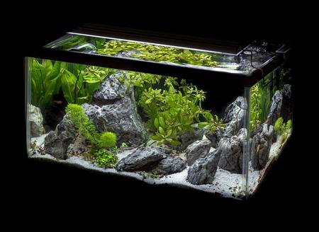 aquarium decoratie