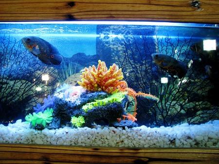 aquarium ornament schip