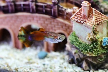 aquarium ornament