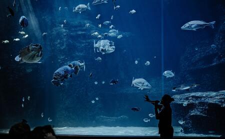 aquarium zand