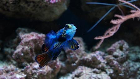 decoraties aquarium