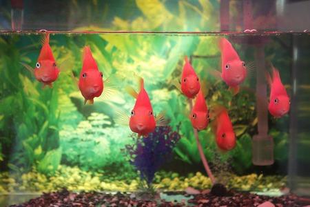druppeltest aquarium