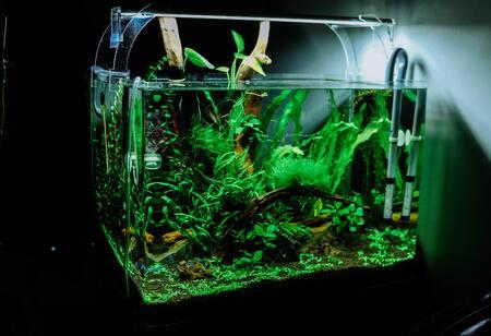 hout aquarium