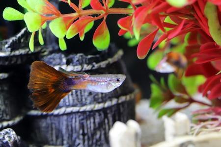 ornament aquarium