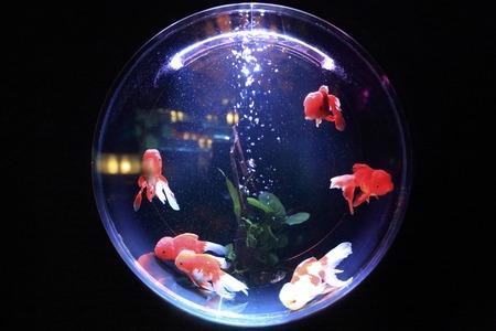 tetra aquarium 54 liter