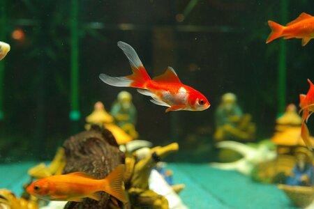 tetra aquarium 60 liter