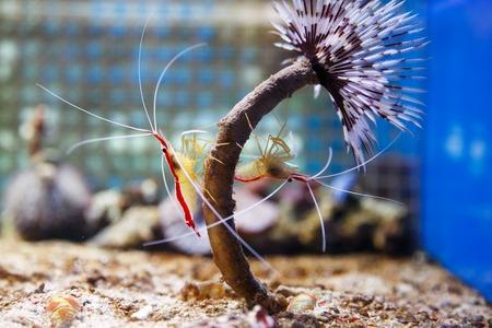 aquarium filterwatten