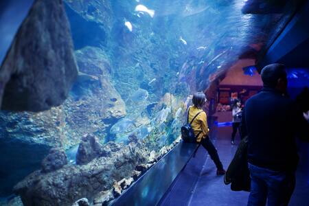 aquarium rots