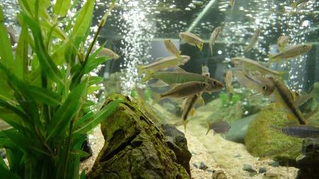 aquarium schepnet