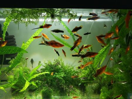 aquarium slang