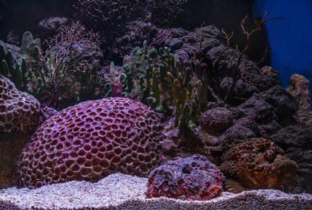 aquarium stromingspomp