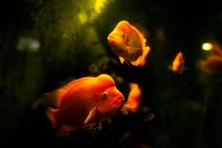aquarium verlichting led