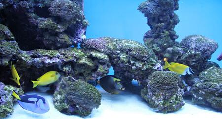aquarium verlichting t5