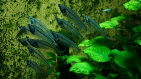 aquariumslang