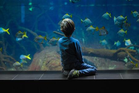 circulatiepomp aquarium