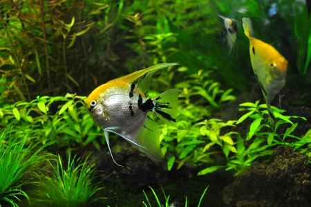 filterwatten aquarium