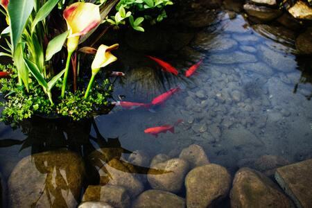 filterwatten voor aquarium