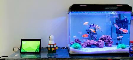 luchtslang aquarium