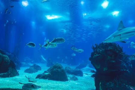 rotsen aquarium
