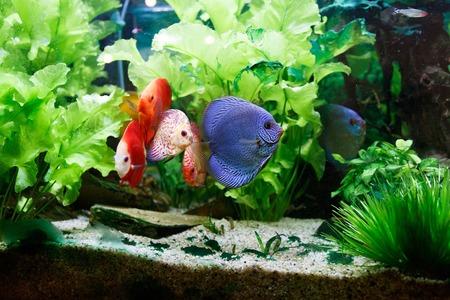 schepnet aquarium