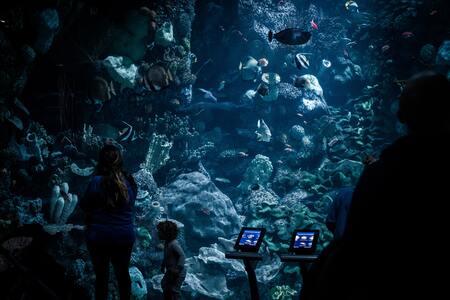stromingspomp aquarium plaatsen