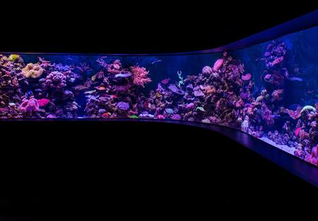 t5 aquarium verlichting