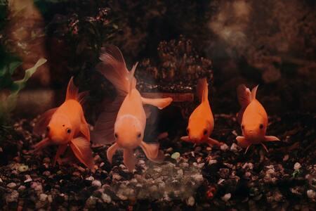 t5 verlichting aquarium
