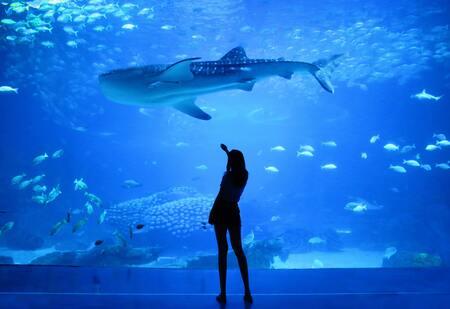 zout aquarium