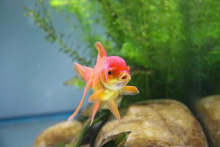 actieve kool aquarium