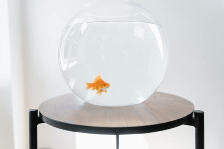 actieve kool voor aquarium