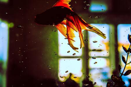 aquarium filter spons